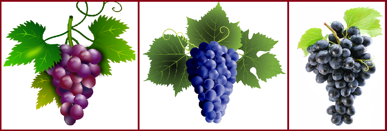 Grapes - red, blue, black