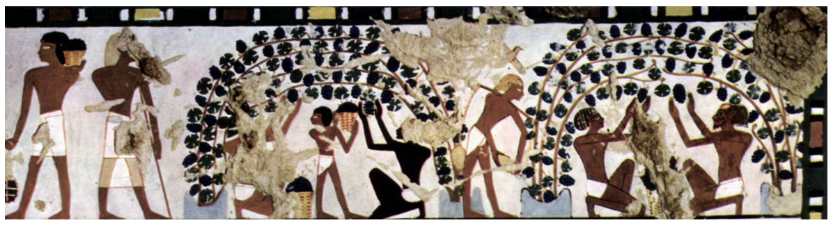 Wall painting in the tomb of Chaemwese in Thebes around 1450 BC Chr. With Weinbaumotiven
