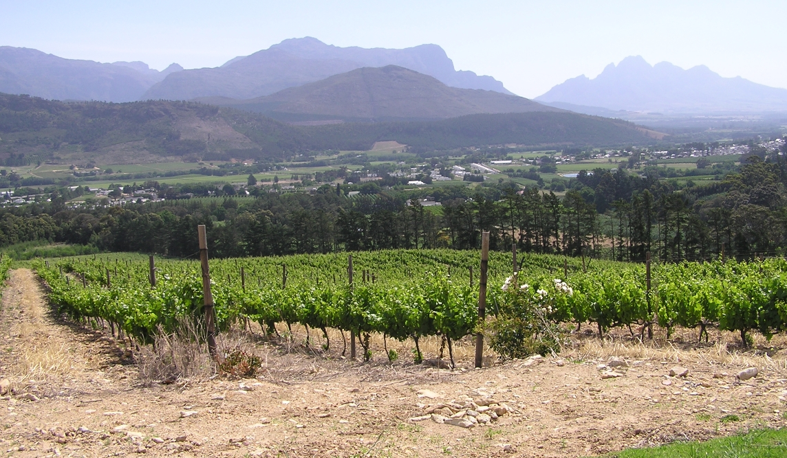 Franschhoek - vineyards