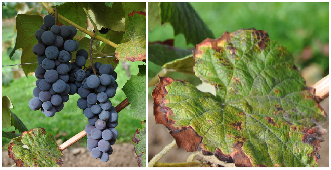 Steuben - grape and leaf