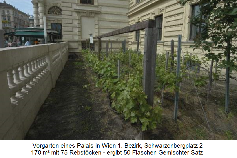 smallest vineyard - Vienna Schwarzenbergplatz - 170 m²