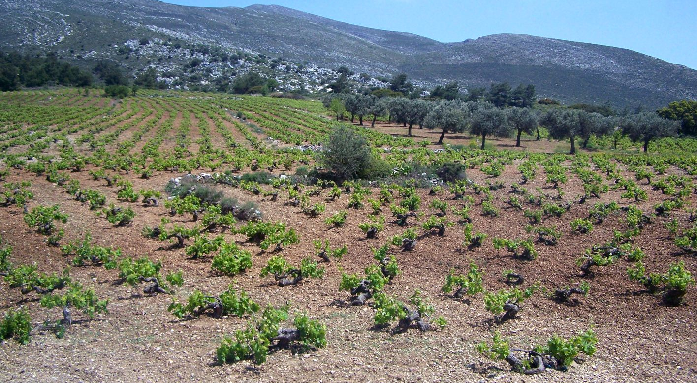 Vineyards on Rhodes with soil education form