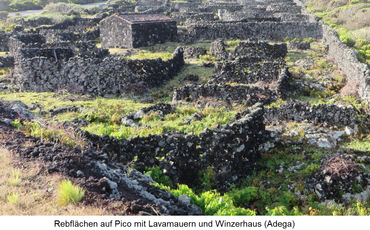 Vineyards on pico with lava walls and winegrower's house (Adega)