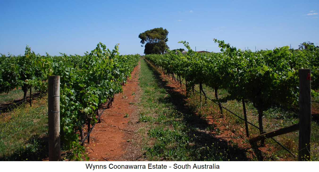 Terra Rossa - Vineyard - Wynn South Australia