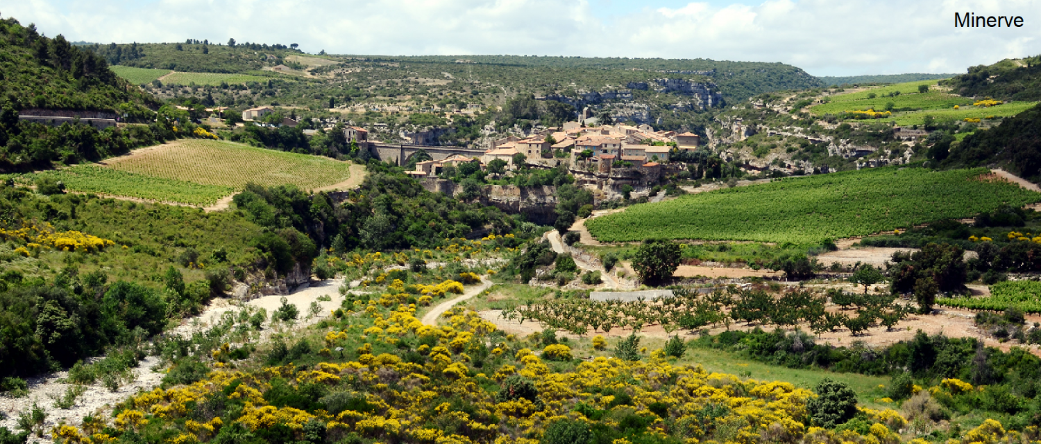 City of Minerve surrounded by vineyards