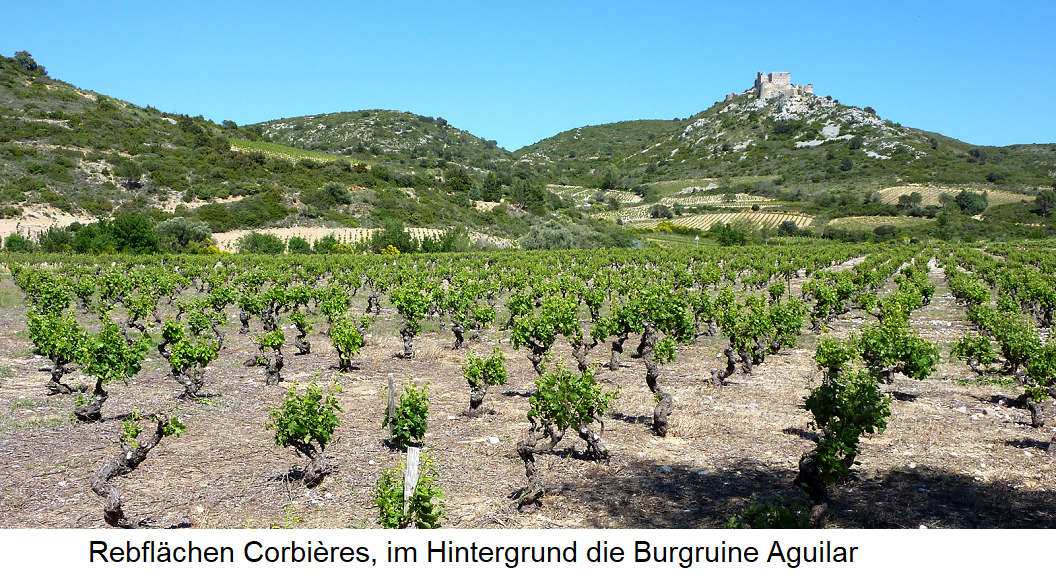 Vineyards in Corbières - in the background the castle ruins Aguilar