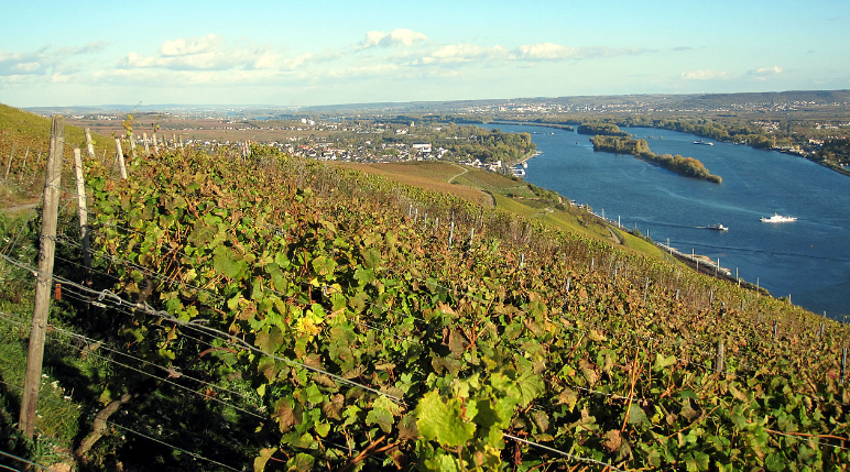 Single location Berg Kaisersteinfels in Rüdesheim in the Rheingau