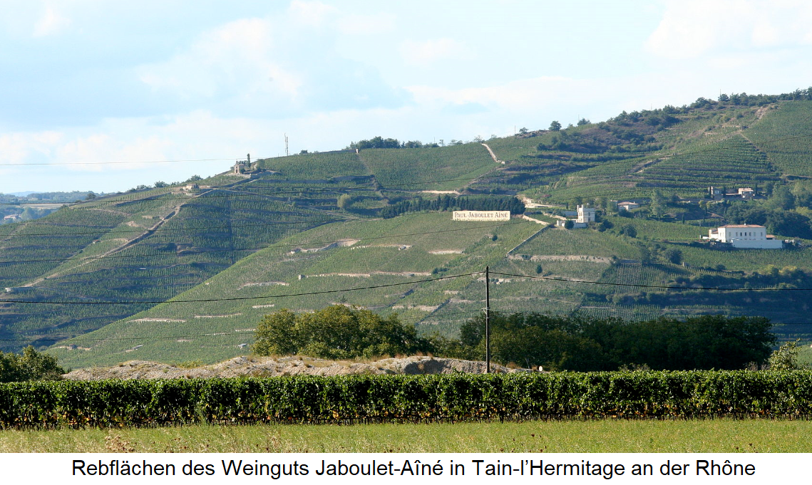 Vineyards of the Jaboulet-Aîné vineyard in Tain-l'Hermitage on the Rhône