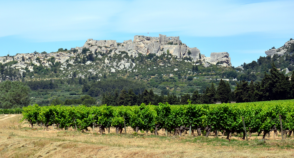 Vineyards in the AOC area of Les Beaux-de-Provence