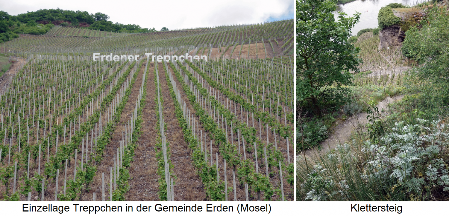 Single layer of podium in the municipality of Erden (Mosel) - vineyards and via ferrata