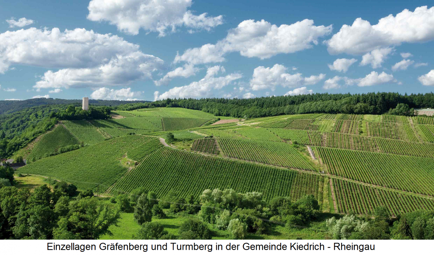 Single layers Gräfenberg and Turmberg in the municipality Kiedrich in the Rheingau