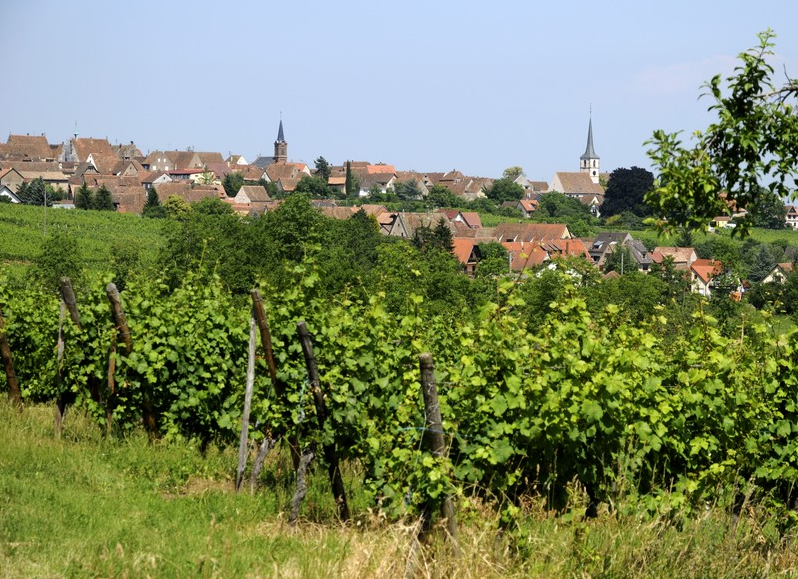 Alsace Grand Cru - location Zotzenberg