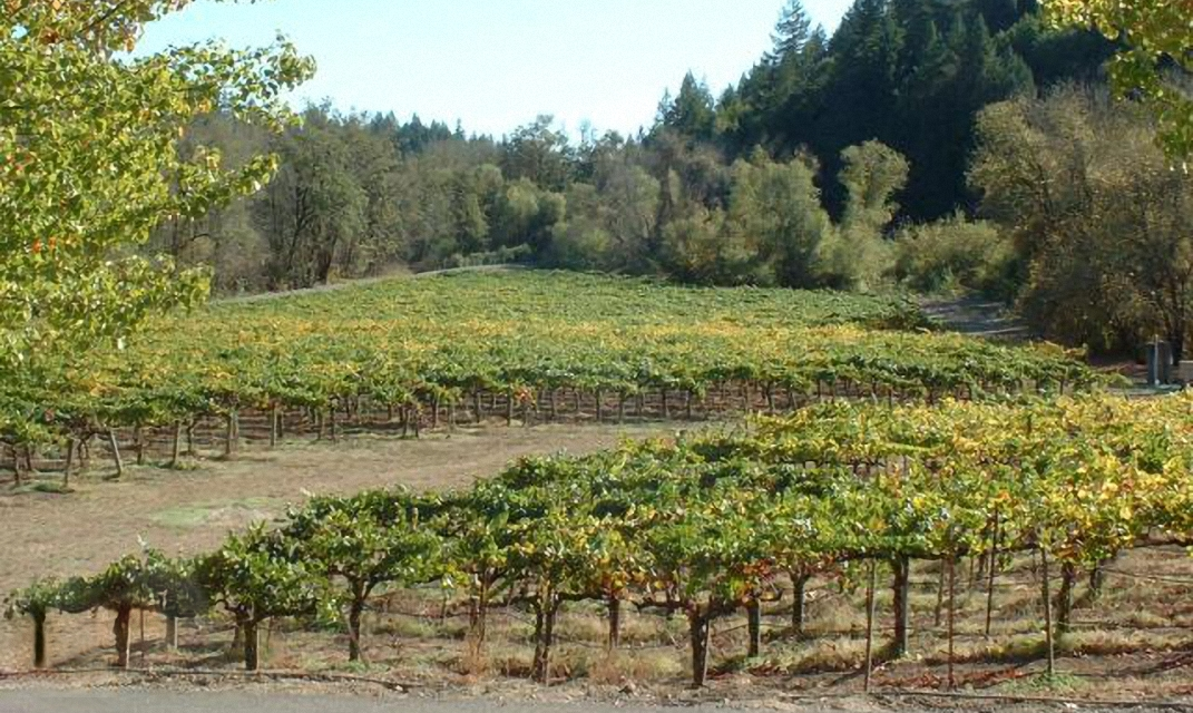 Vineyards in the Russian River Valley