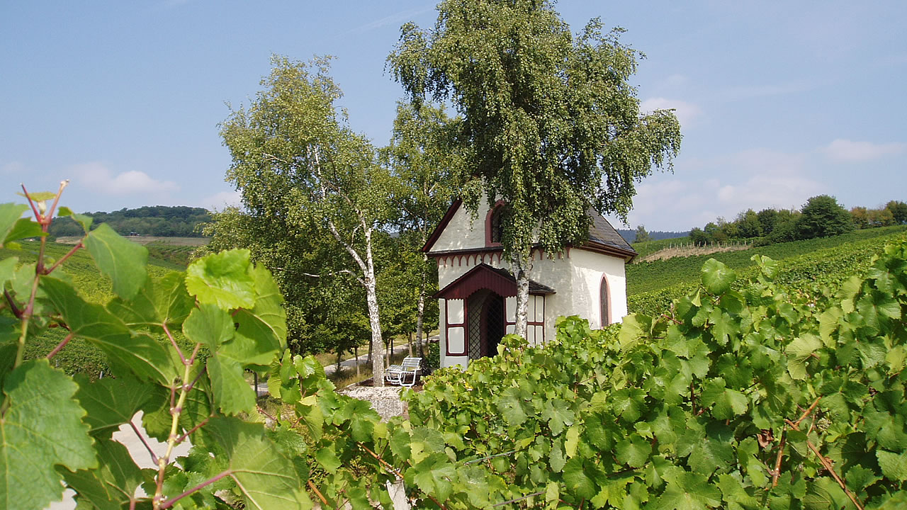 Riede Schönhell in the town of Hallgarten (Rheingau)