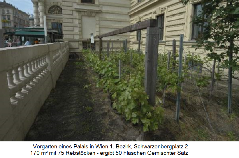 Vienna - smallest vineyard with 170 m² on Schwarzenbergplatz