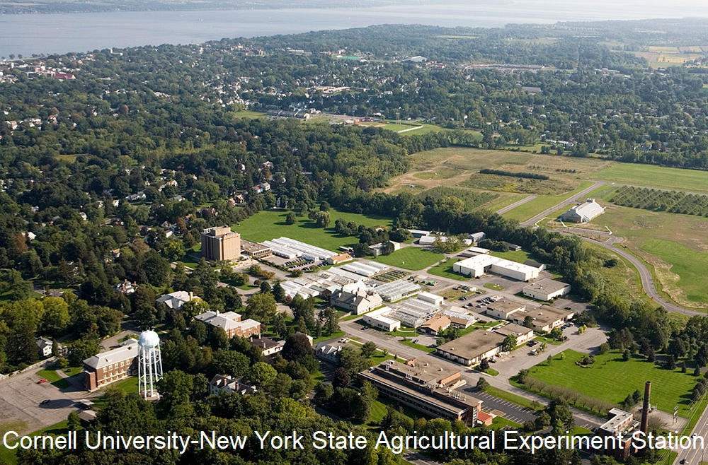 Cornell University - New York State Agricultural Experiment Station