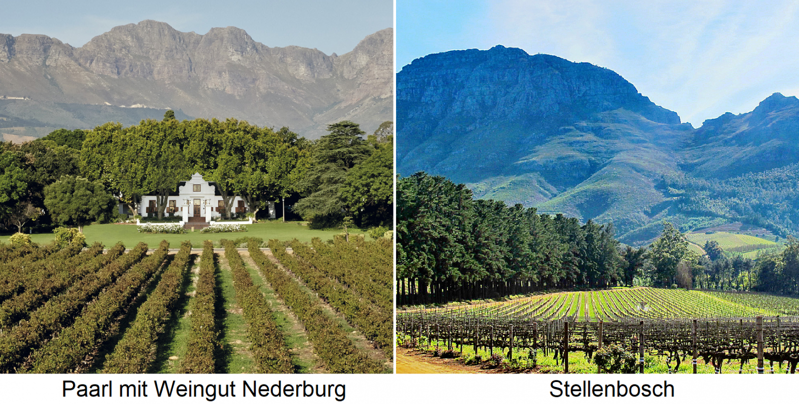 South Africa - vineyards in Paarl (with winery Nederburg) and Stellenbosch